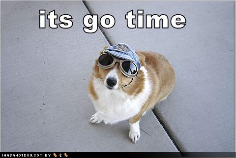 Funny-dog-pictures-go-time