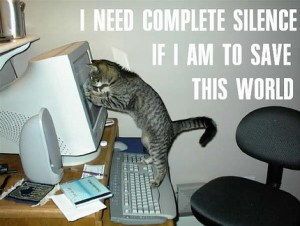 Funny_cat_pictures_pc_3