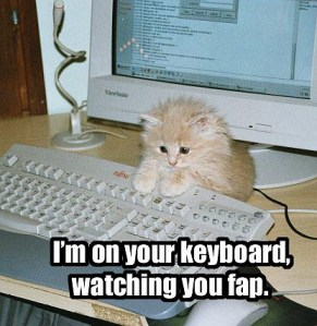 Funny_cat_pictures_pc_4