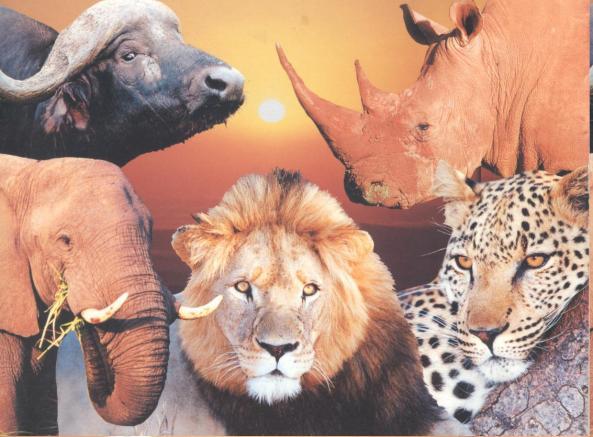 De 5 vanZ-Afrika gr